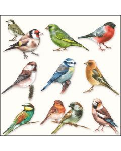 Collection of Birds - 4 Napkins for Decoupage