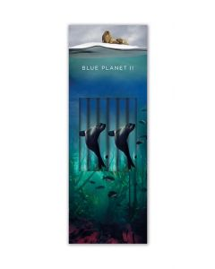 Museums and Galleries Pencil Box Blue Planet II Galapagos Sea Lion